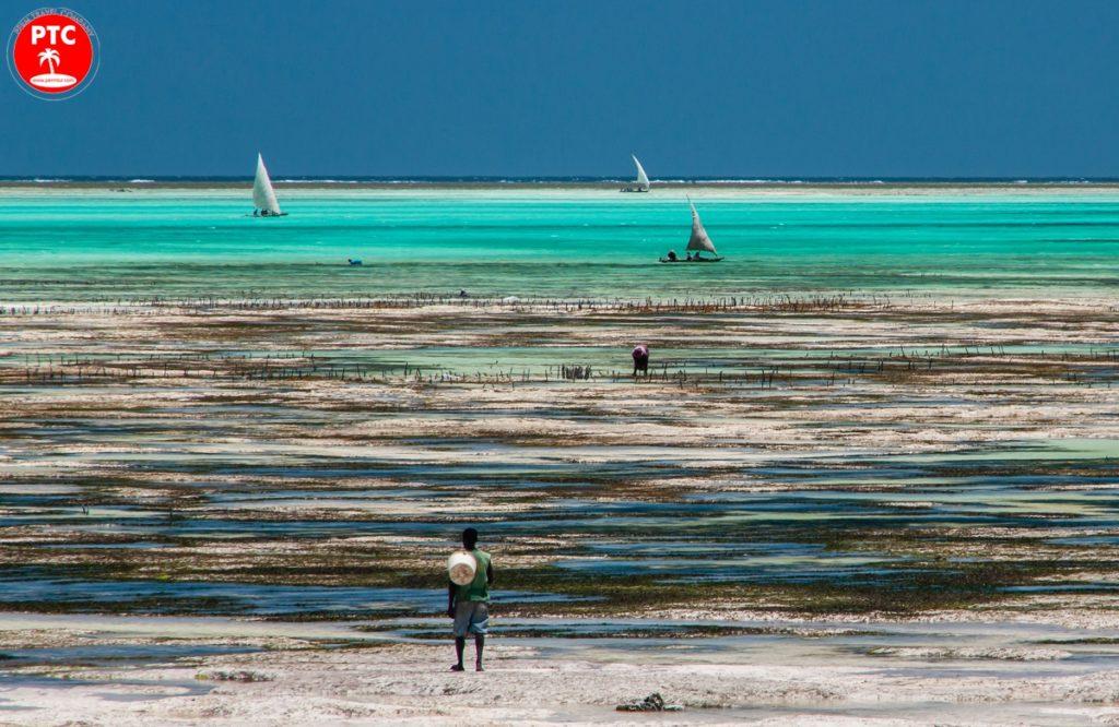 Пляжи Занзибара: восточные пляжи