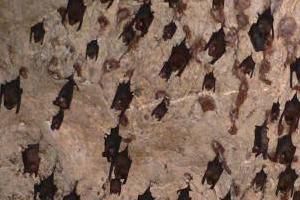 Пещеры летучих мышей (Gua Kelawar). Лангкави. Малайзия.