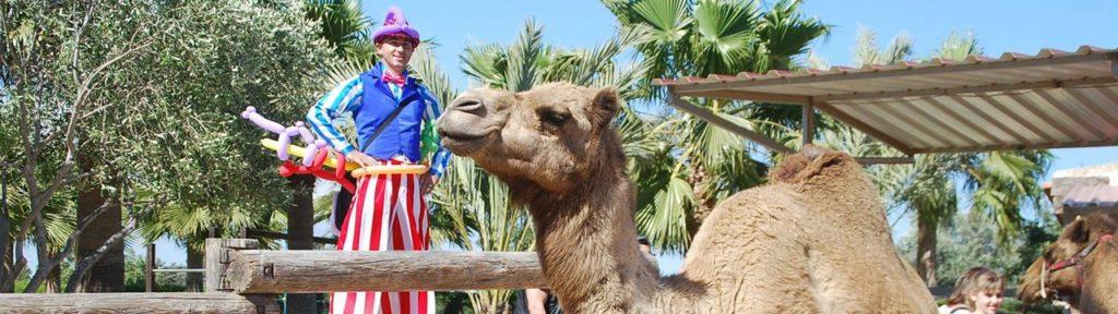 Camel Park в Мазотос. Кипр