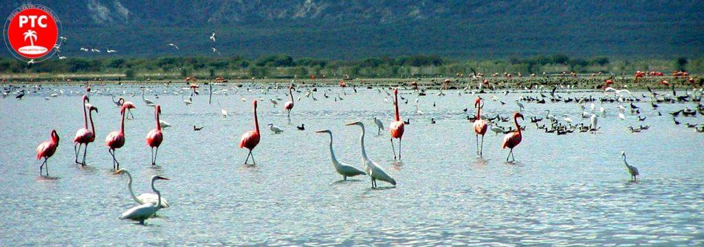 Туры в Доминикану. Озеро Lago Enriquillo.