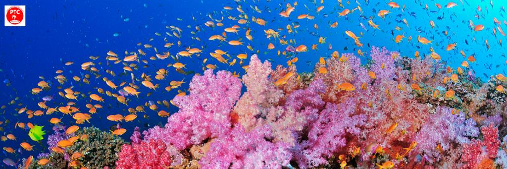 Подводный мир Палавана. Филиппины.