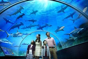 """Аквариум """"Подводный мир"""" Лангкави."""