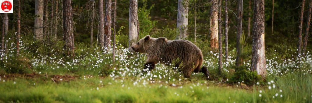 Туры по России: Водлозерский национальный парк