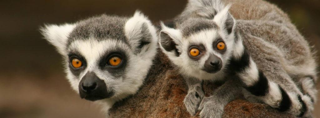 Зоопарк в Пафосе. Кипр